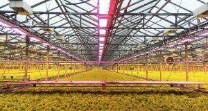 АtomSvet® BIO: экономия и прибыль | Полезная информация о светильниках АтомСвет Энергосервис