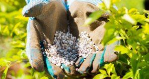 Виды удобрений для огорода и сада